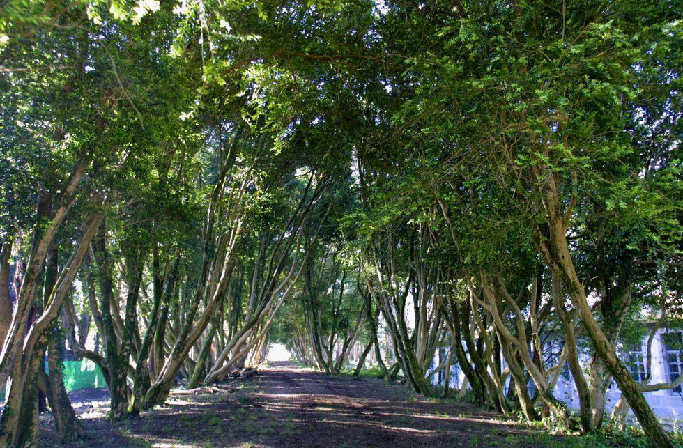 Paseo dos Buxos en la Isla de San Simón